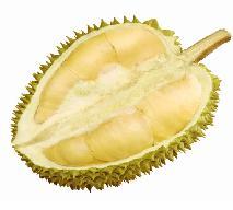Durian - czym jest? Jak smakuje?