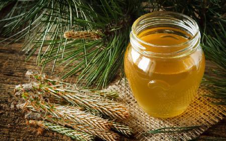 Syrop z sosny - cudowny lek na przeziębienie i suchy kaszel