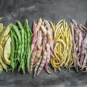Fasolka szparagowa - przepisy, odmiany i właściwości